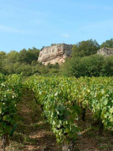 Vaux Valley and botanical trail - Hikes & walks in Saint-Martin-sous-Montaigu