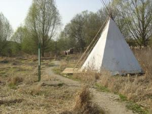 Tipi in the Swamp