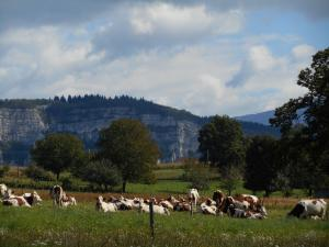 Rural environment, quiet and authentic, milk production has a majority in Avressieux