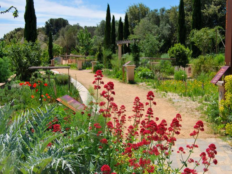 Jardin antique m diterran en lieu de loisirs balaruc - Comment supprimer le liseron au jardin ...
