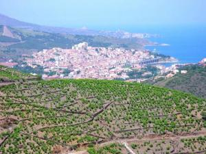 Vineyard of Banyuls-sur-Mer