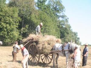 Festival Combine and Crafts: transportation of the crop