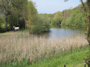 Vauchrétien - Peaceful horses at the edge of the pond