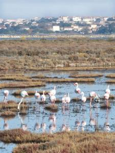 The flamingos in the salt