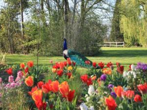jardin des martels - lieu de loisirs à giroussens