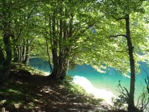 Lac de Bious-Artigues and undergrowth