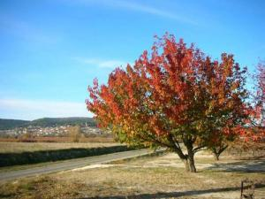 Laudun - Cherry in autunno