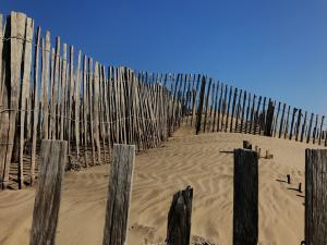 Ganivelles allowing the maintenance of the dunes