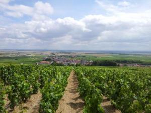 A view of Mesnil -sur-Oger since the vines