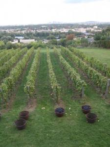 Vineyards Caves (Pecq © City of)