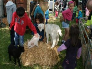 Florexpo and Animal Day - Holiday (Pecq © City of)