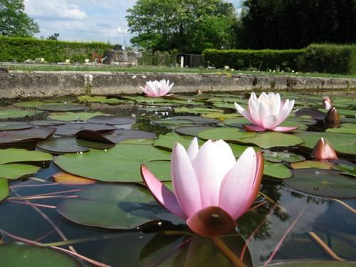 Photos le temple sur lot tourisme vacances week end - Jardin des nenuphars le temple sur lot ...