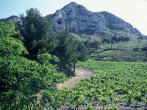 Vineyards AOC Baux de Provence