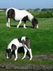 Pony pornics