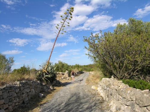 Leucate - Landscapes and walking around Leucate