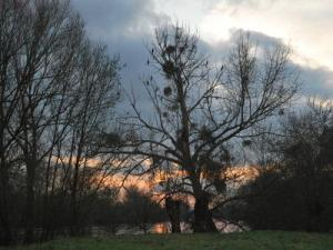 The Tree of cormorani nel Battler isola
