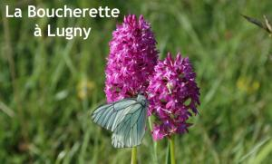 The classified natural site of La Boucherette, renowned for its orchids