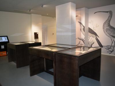 mus e m dard lieu de loisirs lunel. Black Bedroom Furniture Sets. Home Design Ideas