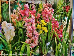 Exhibition of orchids (© Jean Espirat)