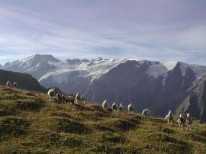 The herds Emparis plateau in front of the glaciers