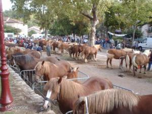 Fête traditionnelle du cheval