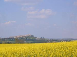 Monflanquin, rapeseed field