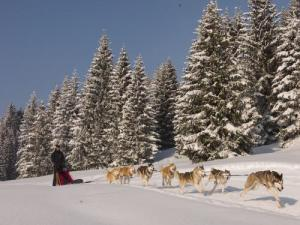 Dogsledding at Morillon