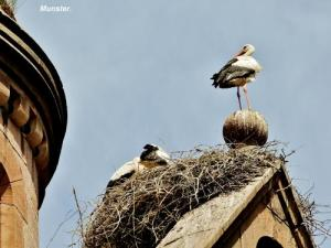 Storks on the temple (© Jean Espirat)