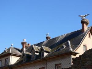 Storks on the rooftops of Munster (© S. Wernain)