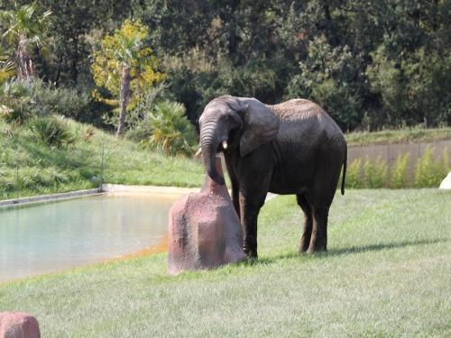 parc zoologique african safari lieu de loisirs plaisance du touch. Black Bedroom Furniture Sets. Home Design Ideas