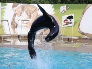 Parc zoologique african safari lieu de loisirs for Piscine plaisance du touch