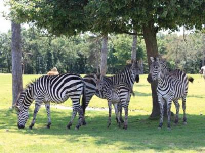 Parc zoologique african safari lieu de loisirs for Sevilla plaisance du touch