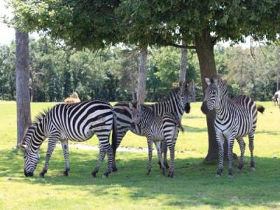 Dierenpark african safari recreatiegebied in plaisance for Sevilla auto plaisance du touch