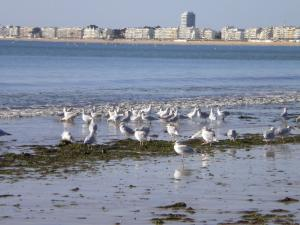seagulls at low tide