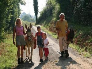 Walk with donkeys and llama