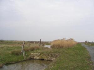 Swamp Saint-Agnant
