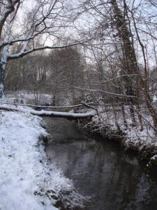Barley under Snow