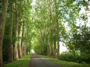 The avenue of majestic plane trees linking the Loire village