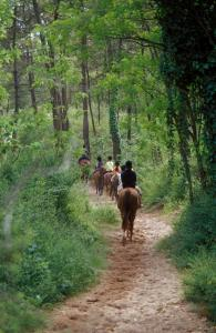 Horseback ride in the forest