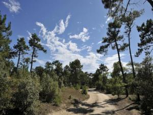 Pine forest, cycle track