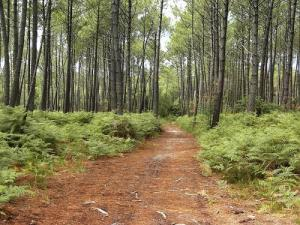 Forest roads : walks and hikes