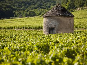 Cabotte in the vineyards (© Beaune Tourism @ Michel Joly)