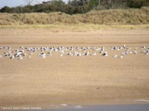 These terns are on a protected site