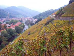 Thann vu du vignoble