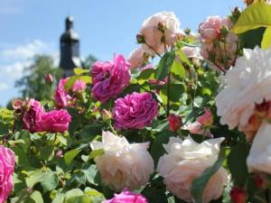 Rose Garden of the Garden of the Abbey of Thiron-Gardais