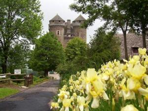 Castle Anjony with yellow lilies