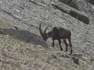 Wild Life to the Galibier