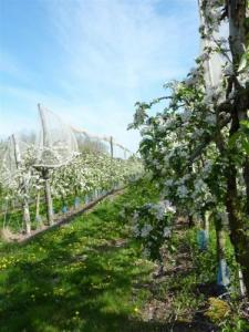 Orchards in Vennecy