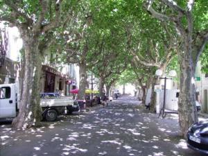Promenade lined with plane trees peaceful