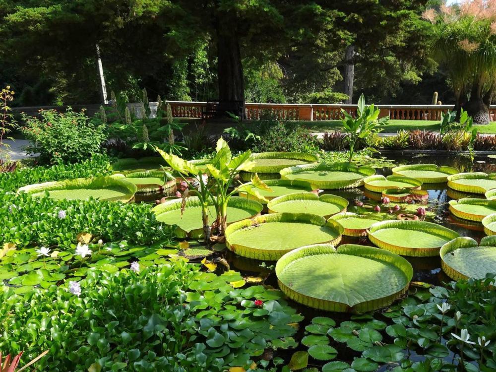 Foto rendez vous aux jardins evento in francia for Aux jardins